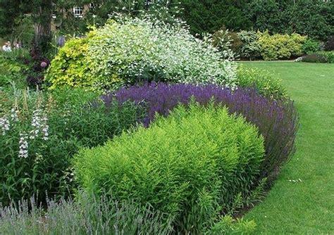 fiori per aiuola piante per aiuole piante da giardino aiuole piante
