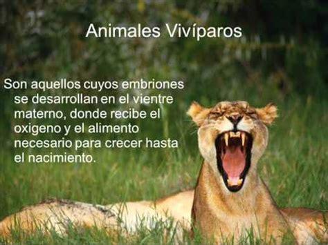 imagenes de animales viviparos viv 237 paros y ov 237 paros youtube