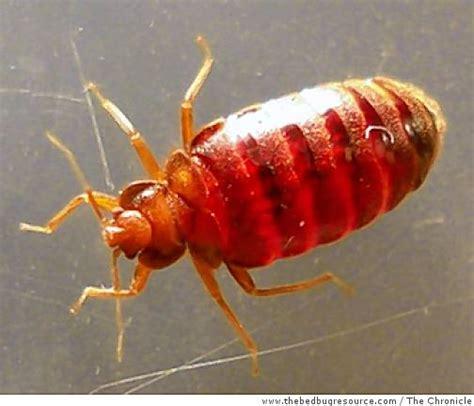 don t panic bugs that bedbugs in san francisco but don t panic sfgate