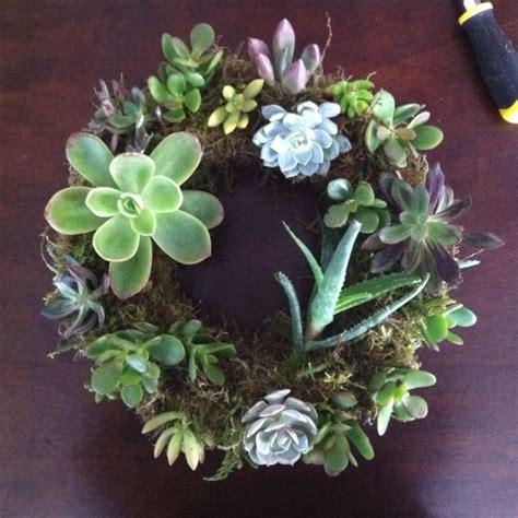 succulent wreath gardening with succulents pinterest