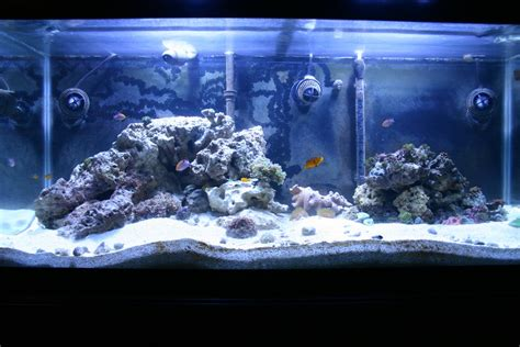live rock aquascaping page 2 reef keeping