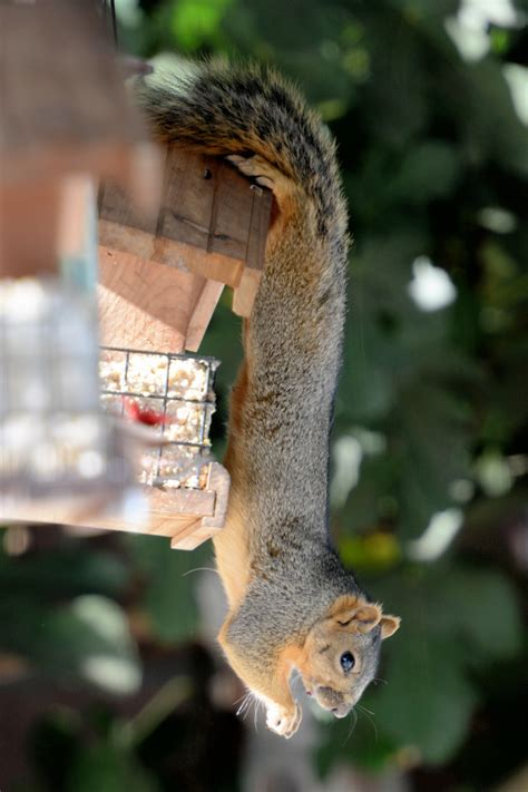 what to feed squirrels in backyard 28 images how to