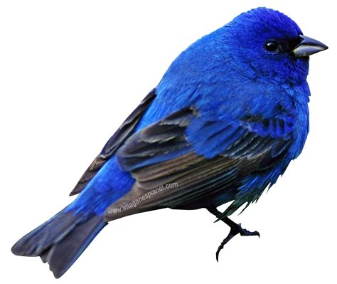 imagenes de aves sin fondo im 193 genes con fondo transparente im 225 genes de amor con
