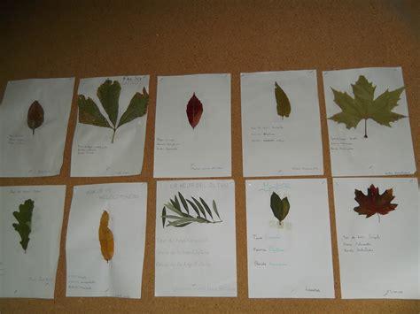 libro el herbario de las la carpeta de rufino herbario de hojas