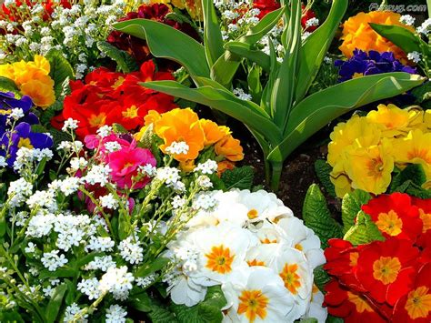 funzug beautiful colorful flowers wallpapers