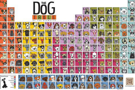periodic table of dogs angry squirrel studio debuts version of the table