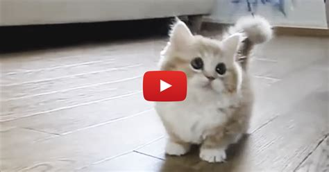 gets kitten adorable kitten gets confused but it s almost to handle awwww