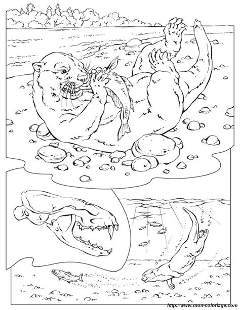 coloring book on tidal ausmalbilder malvorlagen f 252 r lehrkr 228 fte bild otter