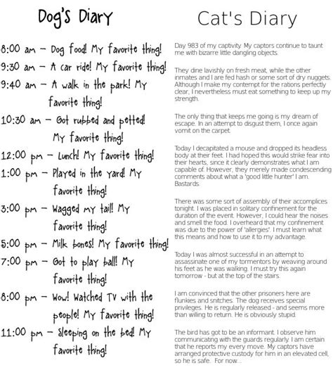 and cat diary 17 best ideas about cat diary on cat vs kittens and cats