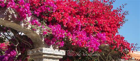 fiori per balconi 5 fiori estivi consigliati per balconi e terrazzi al sole