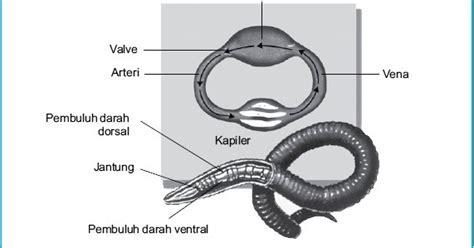 Ebook Cacing sistem sirkulasi darah pada cacing tanah panduan cepat