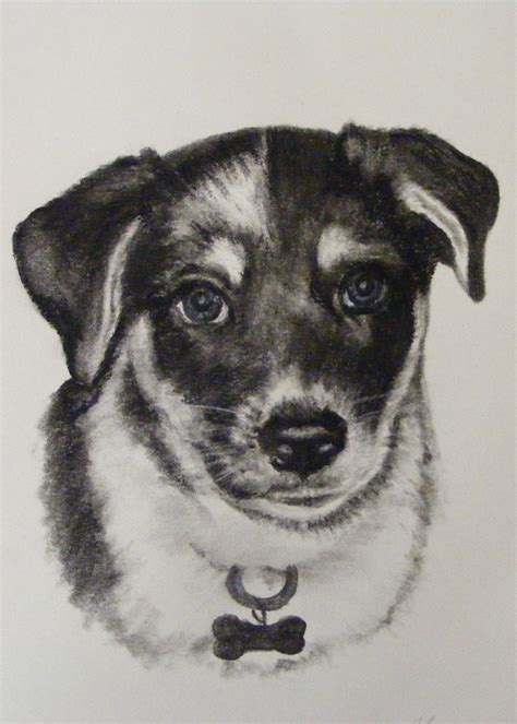 charcoal for dogs charcoal drawings page 2