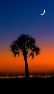 what do trees represent palmetto tree state tree south carolina sc