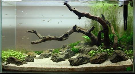 Driftwood Aquascape by Aquascaping With Driftwood Rocks Live Plants Www