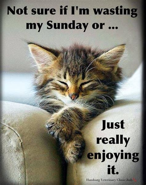 A Cat On A Sunday by 1000 Images About Cats On Sundays On