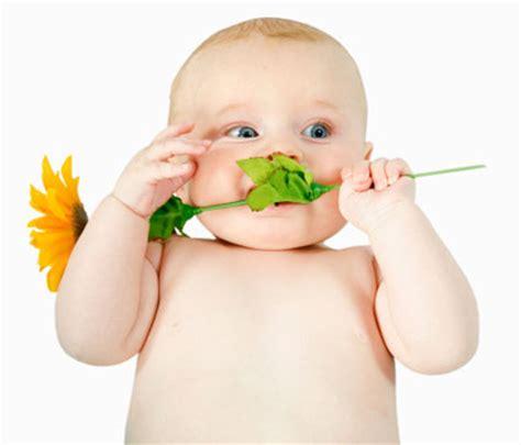 fiori per nascita bambino fiori per fiocco azzurro frasi per una nascita fiocco