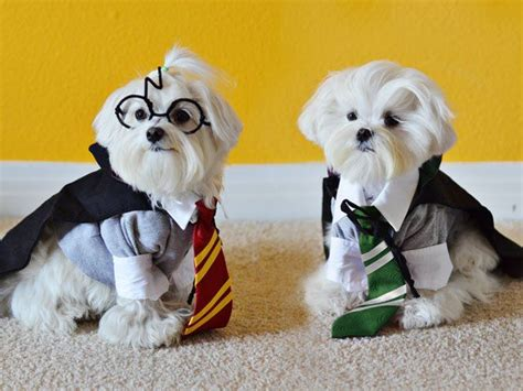 harry potter puppy 1000 ideas about harry potter costume on costumes black