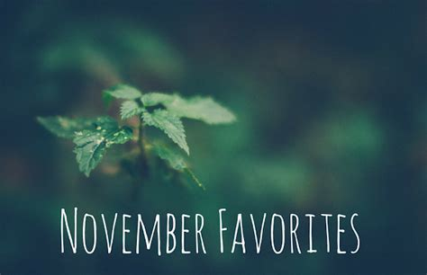 Yogi Detox Tea Kroger by The Berger Bungalow November Favorites
