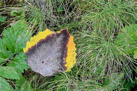 Pilze Englischer Garten by R 245 Uge Pilz Woche Dritte Fotogeschichte Looduskalender Ee