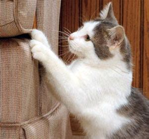 how to prevent cats from scratching furniture
