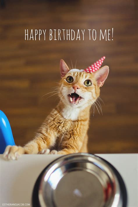 cat birthday happy birthday to us a cat birthday celebration 187 local