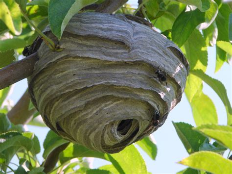 What Of Bees Make Paper Nests - jim 4 11 about utah