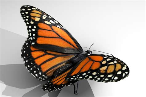 monarch design slideshow for 3d monarch butterfly