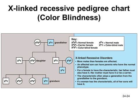 is color blindness x linked chapter 24 patterns of chromosome inheritance ppt