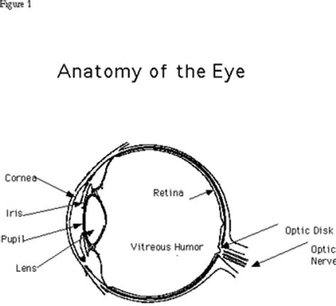 how to draw eye diagram how we see the steps of human vision