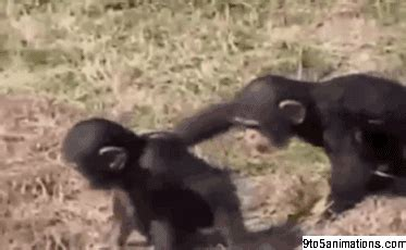 funny monkey gif toanimationscom hd wallpapers gifs backgrounds images