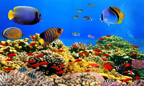 wallpaper colorful fish and interactive water under water wallpaper hd wallpaper hd