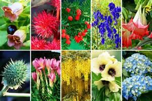 halluzinogene pflanzen im garten die zehn giftigsten pflanzen aus deutschen g 228 rten die welt