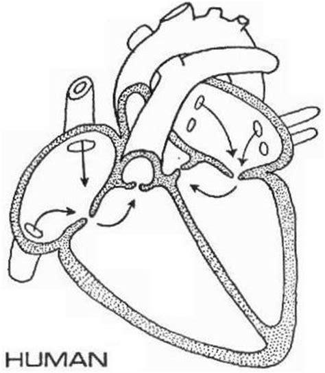 image human heart diagramjpg memory beta  canon star trek wiki