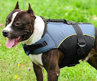 weight vest for dogs reviews on pit bull weight vest american pitbull terrier harness collar leash