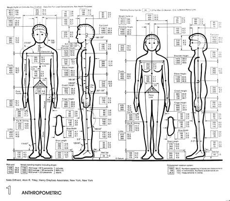 design by humans size guide ergonomics