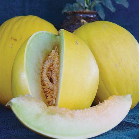 F1 Canary Sed tweety f1 hybrid melon seeds ne seed