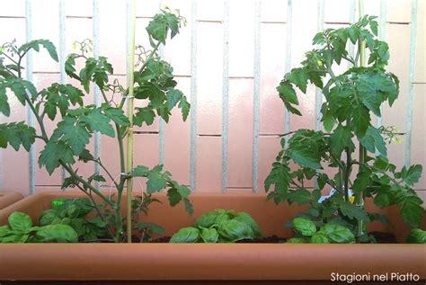 pomodoro in vaso le nuove colture primaverili sul balcone d aprile