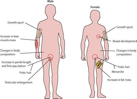photos of male pubic hair during puberty pubertal development and regulation the lancet diabetes