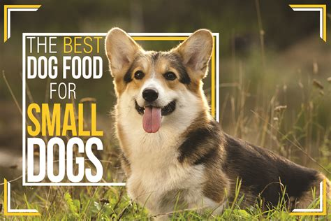 best food for dogs best food for small dogs small breed food