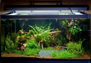 Source Http Aquarium Webzine Com Poisson Eau Douce Eau De Mer Php