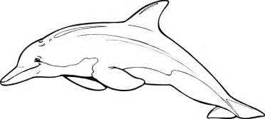 dolphin pictures to color dolphin coloring pages 2 coloring pages to print