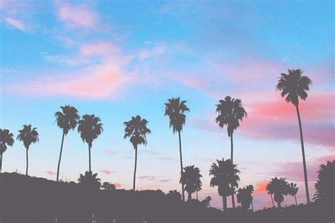 summer vibes palm trees hd free your mind the wave state