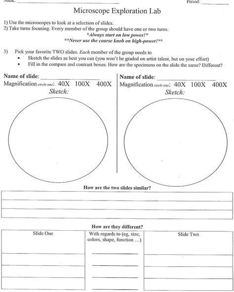 Plant Cell Worksheet by Plant Vs Animal Cell Worksheet Worksheets For School Dropwin