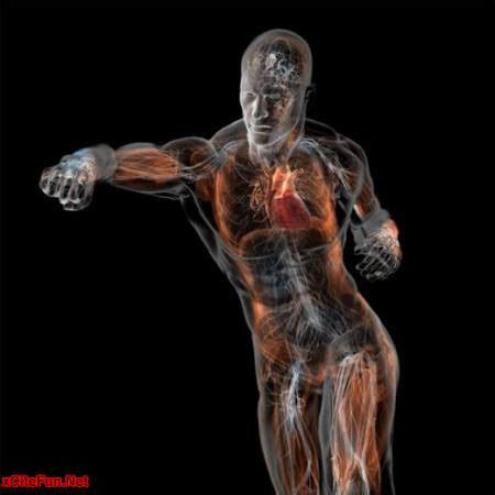 Anatomy Of A Human Body Zooom Inside Xcitefun Net