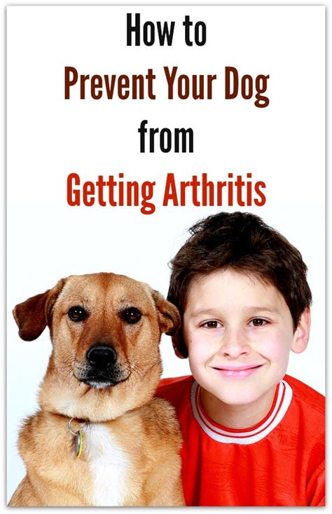how to stop your dog from getting on the couch how to prevent your dog from getting arthritis live a