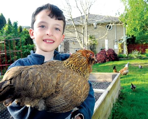 backyard chickens vancouver district of north van pecks away at bylaw to allow henhouses