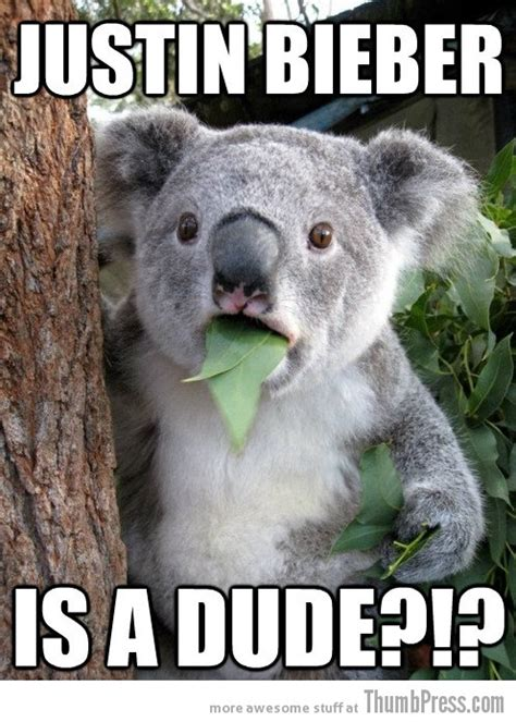Koala Bear Meme - wet koala bear meme