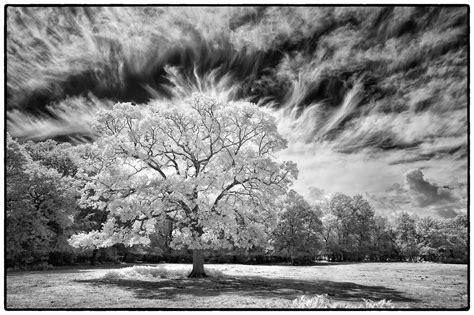 fuji x series x photography fuji x series infrared cameras