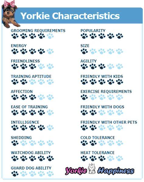 yorkie poo traits yorkie poo rescue dogs hairstylegalleries