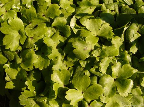 and green foliage plants green plants